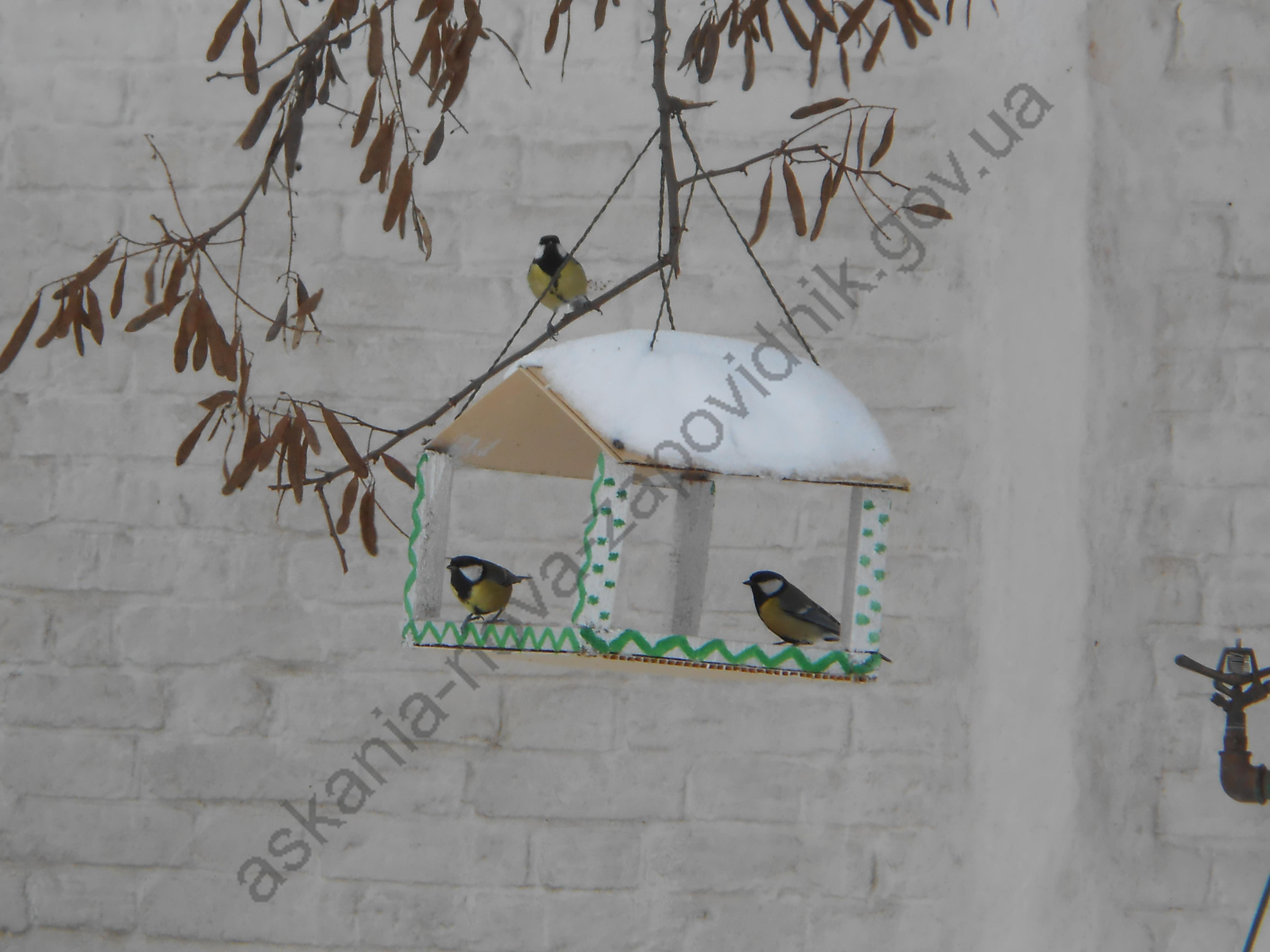 Акція «Допоможемо зимуючим птахам!»