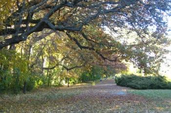 Парк в осінньому вбранні