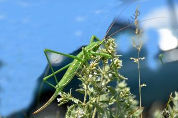 Представник світу комах